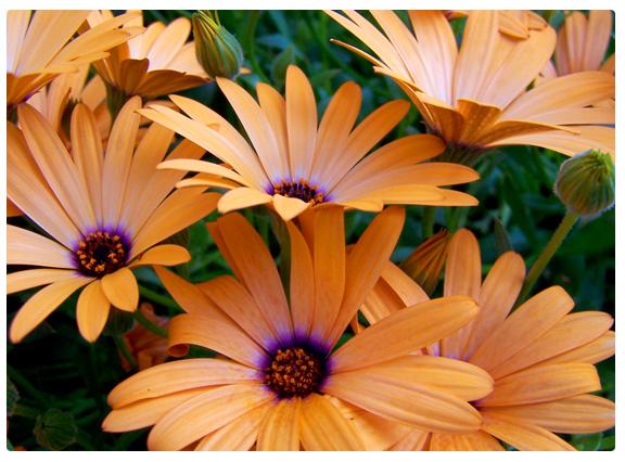 Beneficial Bugs & Beautiful Gardens!