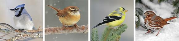 Winter Feeding For The Birds!