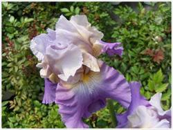 Iris Bore Update