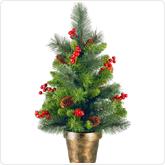 Plantable Christmas Tree.Christmas Trees